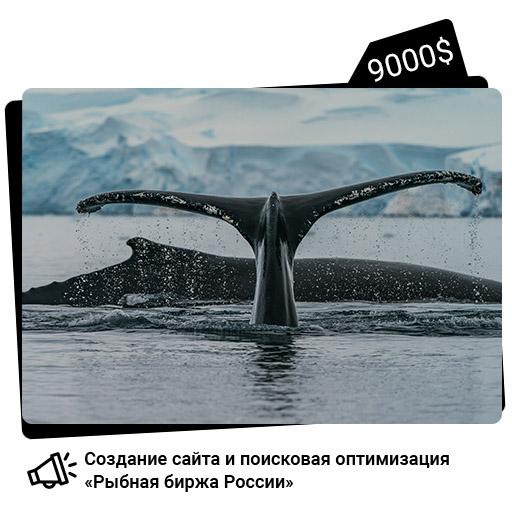 Работы по созданию Рыбной биржи России